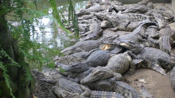 В Таиландском зоопарке понравится и детям, и взрослым
