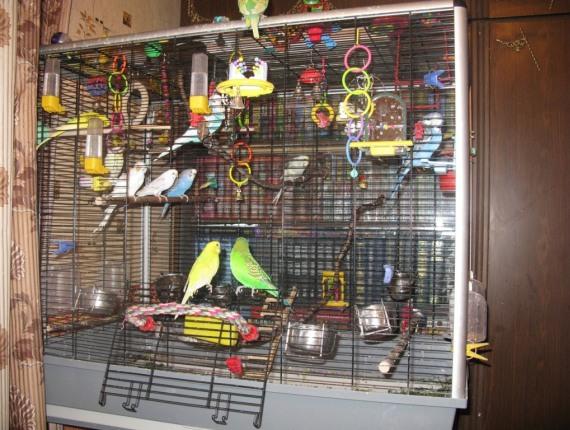 Гнездо для попугая волнистого своими руками
