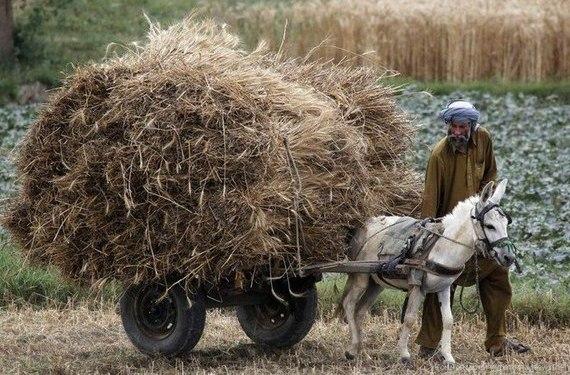 Транспорт в Мали - ослы и верблюды