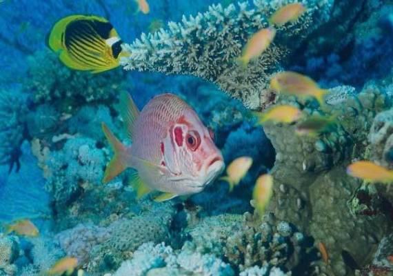 Рас Мохамед, подводный вид