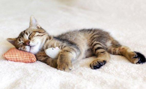 В Париже открывается отель для кошек