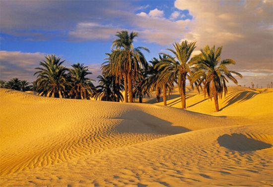 Тунис и деньги: советы туристам