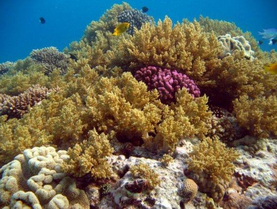Подводный вид близ рифа Small Crack, Египет