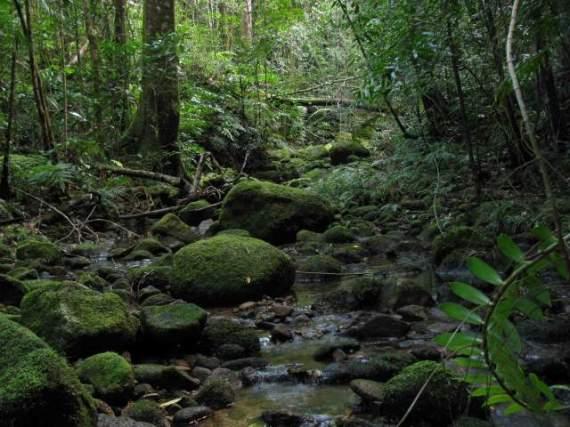 Австралия, национальный парк Квинсленда