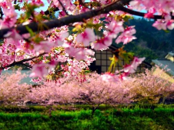 Япония: интересные факты о стране