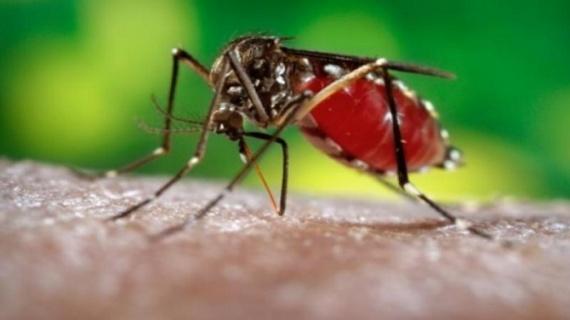 Прививка от желтой лихорадки обязательна для туристов