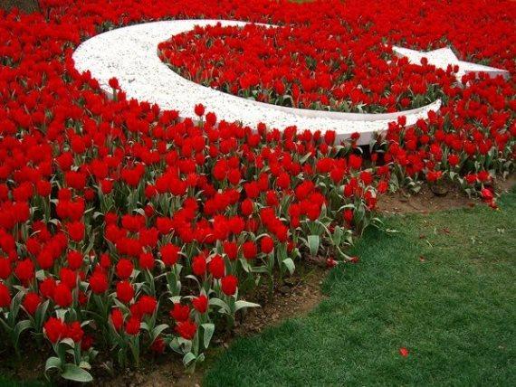 Турция - страна тюльпанов