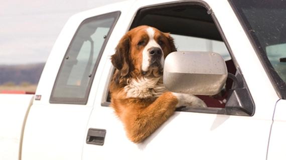 Приучение собаки к автомобильным поездкам