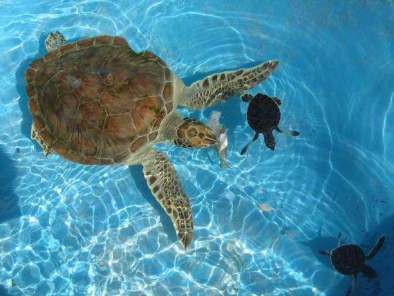 Куба - рай для любителей дайвинга и подводной фотографии