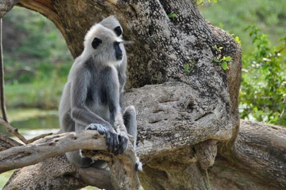 Национальный парк Яла (Рухуну), Шри-Ланка