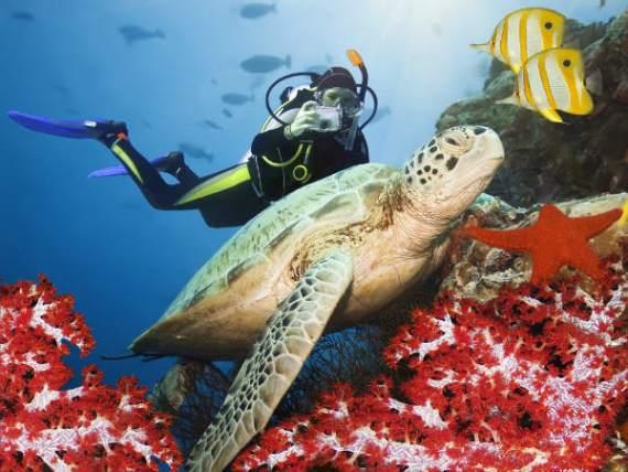 Подводная фотоохота на Кипре