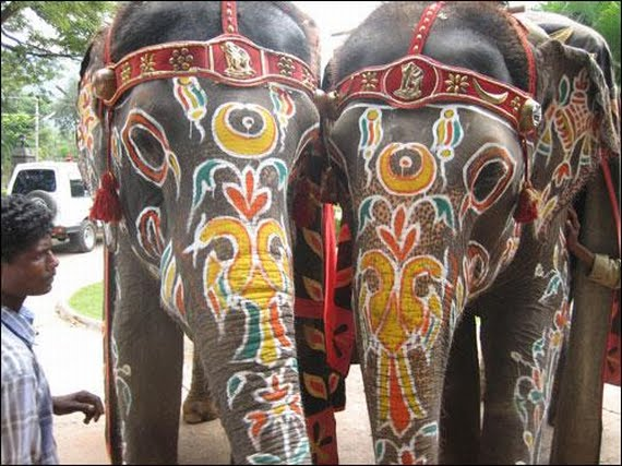 Не забудьте покататься на слоне!