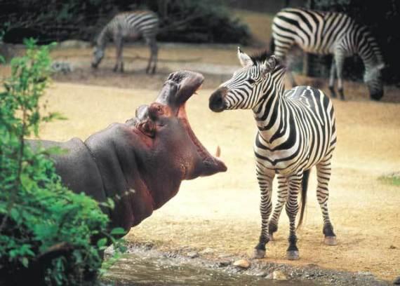 Стамбульский зоопарк (Istanbul Zoo)