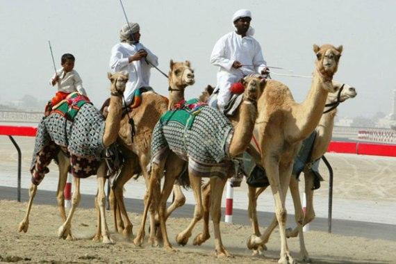 Рас-эль-Хайма, верблюжьи бега