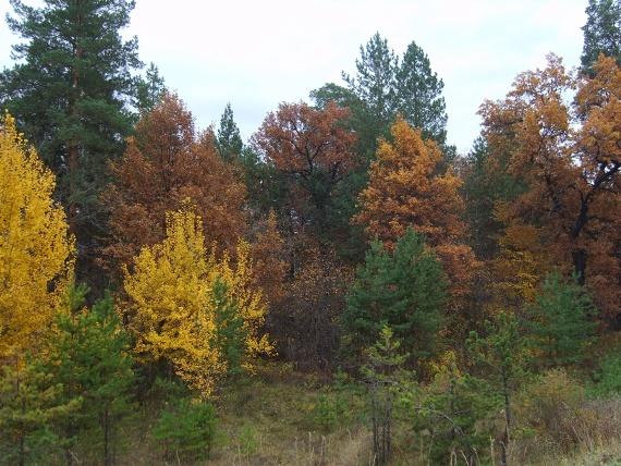 Осень в Бузулукском бору