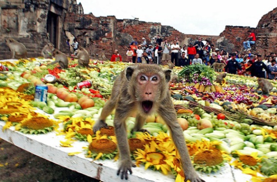 Банкет для обезьян в Таиланде