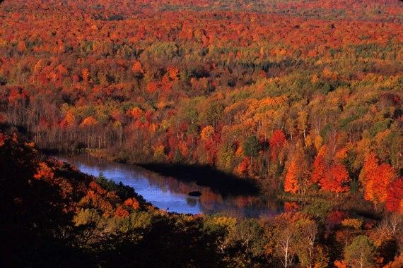Национальный лес Чиквамегон-Николь осенью