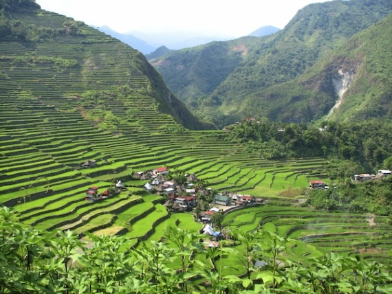 Рисовые террасы поднимаются в высоту на 1700 метров