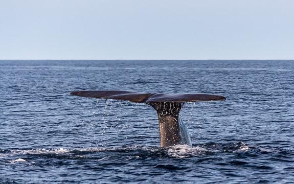 Наблюдение за китами на Шри-Ланке