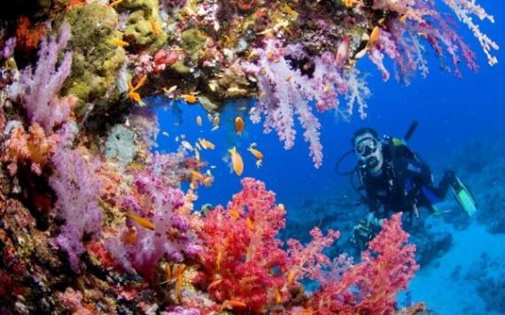 Прибрежная экзотика Египта