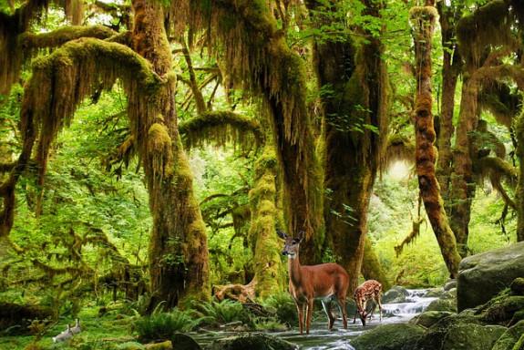 Отдых в дикой природе