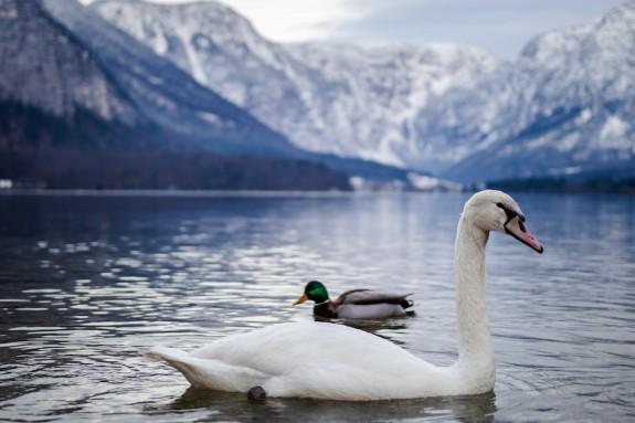 Алтай – озеро Светлое, оно же Лебединое