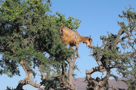 В Марокко и не такое можно увидеть :)