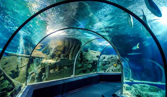 Discovery World Aquarium