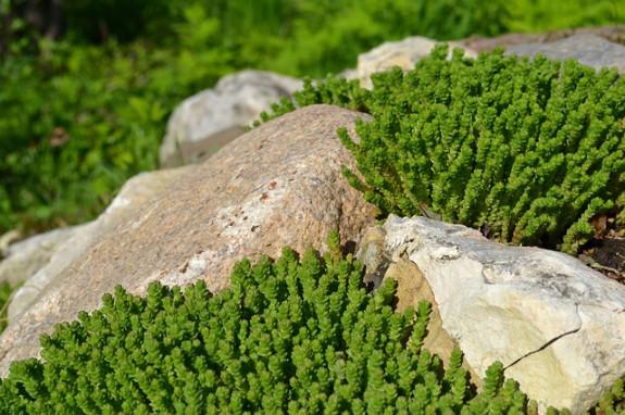 Уголок Альп в собственном саду