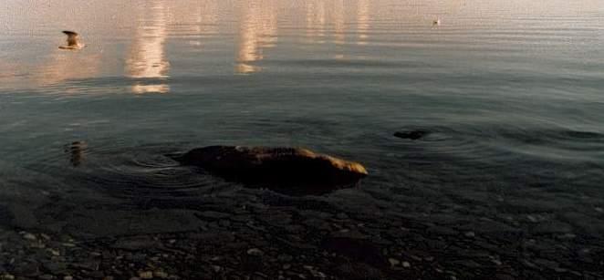 отдых на озере Байкал