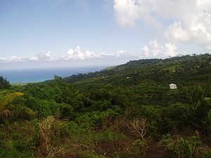 Природа острова Барбадос