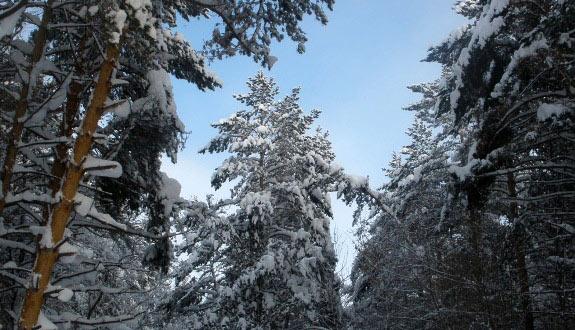 Зимний лес в окрестностях Уфы
